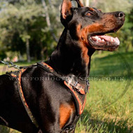 "Designer Dog Harness for Doberman | Leather Dog Harness ""Flame"""