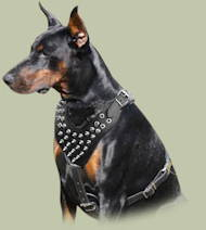 Doberman Harness Spiked Leather Design | Spiked Dog Harness UK