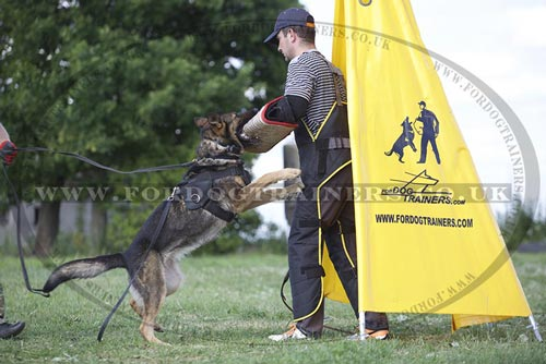 Dog Training for Skills Development