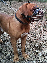 Wire Basket Dog Muzzle for Dogue De Bordeaux UK
