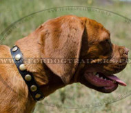 Dog Necklace Collar for Dogue De Bordeaux Dogs for Sale