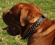 Dogue de Bordeaux Leather Spiked and Studded Collar 3 Rows