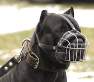 Cane Corso Muzzle for Mastiff | Wire Dog Muzzle for Cane Corso