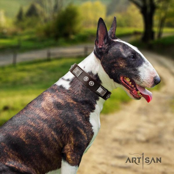 English Bull Terrier Dog Collar with Studs