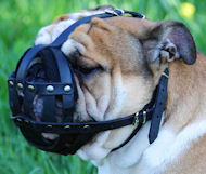 English Bulldog Everyday Light Leather Dog Muzzle UK
