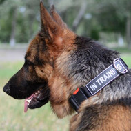 German Shepherd Collar Nylon with Sign Patches, Best Price!