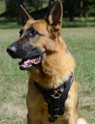 German Shepherd harness for walking and agitation work