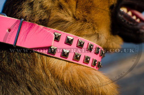 Cool German Shepherd Collars UK