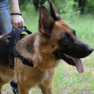 German Shepherd Harness with Handle | Best Nylon Dog Harness