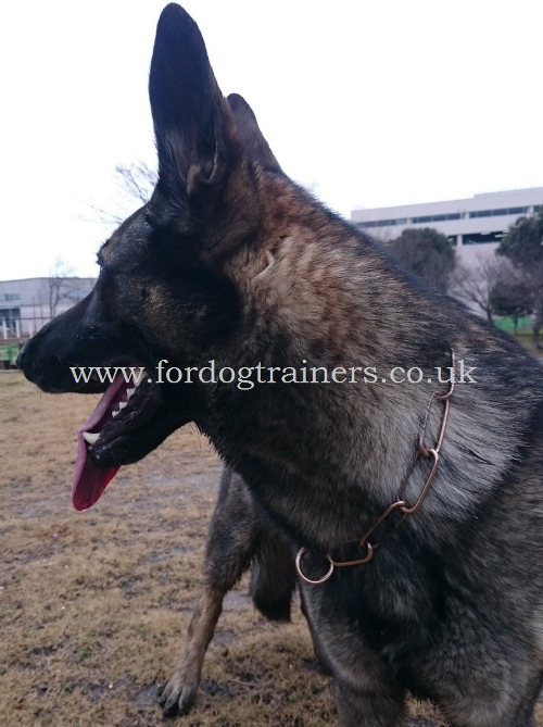 Herm Sprenger Dog Collar for German Shepherd