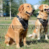 Golden Retriever Dog Training Harness