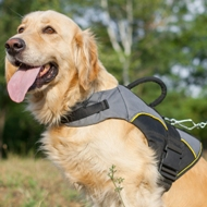 Warm Golden Retriever Jacket for Dog Walking in Winter & Support