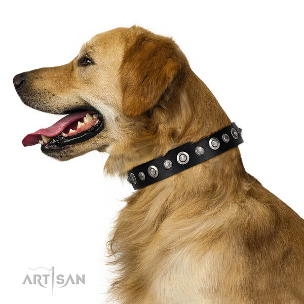 Golden Retriever Collars UK
