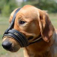 Soft Dog Muzzle for Golden Retriever | Golden Retriever Muzzle