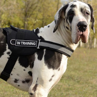 Great Dane Harness for K9 Dogs Training Super Strong Nylon