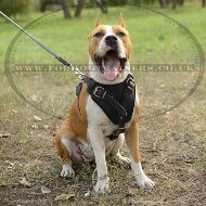 Dog Training Staffy Harness, Genuine Leather