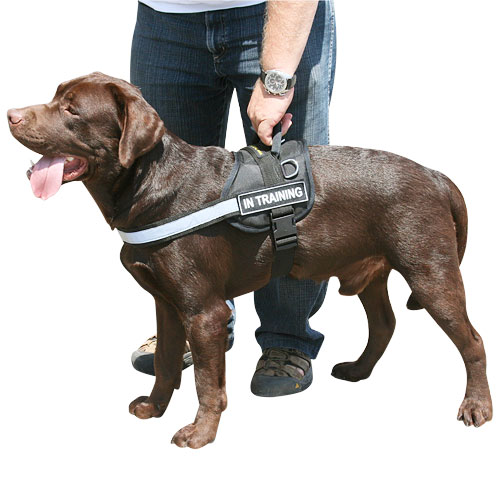 Nylon harness for Labrador