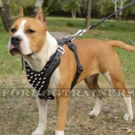 Staffordshire Bull Terrier Harness Spiked Style | Staffy Harnes