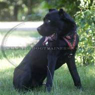 "Dog harness ""Flame"" for Cane Corso"