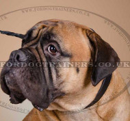 ID Dog Collar for Bullmastiff | Bullmastiff Collar