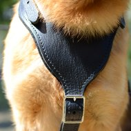 Best Dog Harness for German Shepherd
