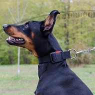 K9 Dogs Collar for Doberman | Nylon Dog Collar for Doberman UK