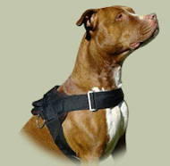 Super Harness for Pitbull Training | Pitbull Harness UK