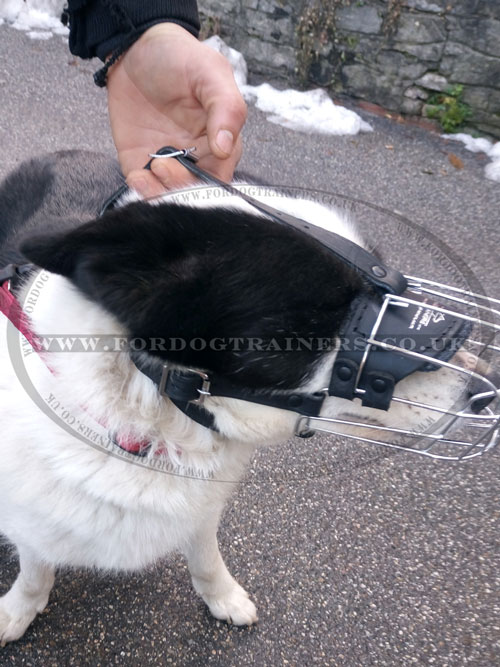 buy dog muzzle basket for Karelian Bear Dog online