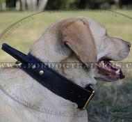 Labrador Dog Collar with Handle