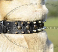 Labrador Collars Spiked Leather Design | Labrador Walking Collar