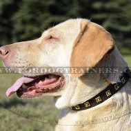 Labrador Collars UK with Brass Studded Design