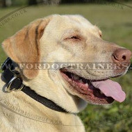 Labrador Collars UK Classic Design | Leather Dog Collar for Lab