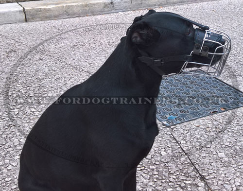buy wire dog muzzle for Labrador online UK