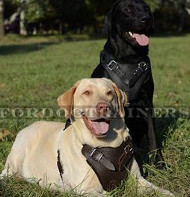 Labrador Harness UK Bestseller★★★★&#9733