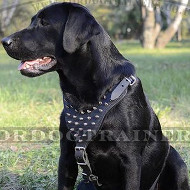 Labrador Harness for Medium and Large Dog Walking, Spiked Design