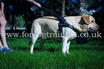 Labrador Guide Dog Harness