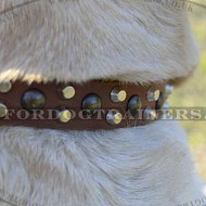 Labrador Walking Dog Collar | Leather Dog Collar for Labrador