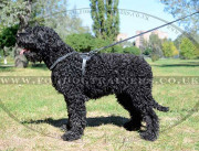Leather Harness for Dogs like Black Russian Terrier