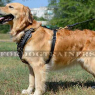 Luxury Dog Harness for Golden Retriever