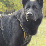 German Shepherd Harness Brass Studded | Best Royal Dog Harness