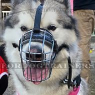 Padded Husky Muzzle Basket for Dogs Safety and Comfort Best Seller