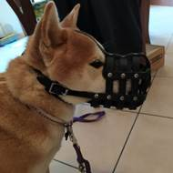 Siberian Husky Muzzle Soft and Strong | Leather Muzzle for Husky