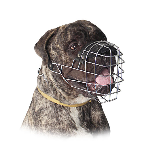 Bullmastiff Muzzle Best Design of Wire Basket Dog Muzzles UK