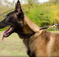 Soft Leather Half Choker Dog Collar for Malinois Shepherd