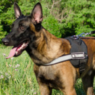Malinois Harness with Reflective Trim | Nylon Dog Harness