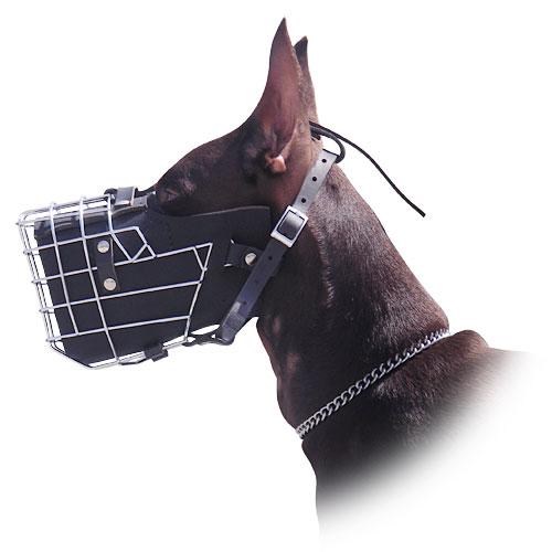 Doberman muzzle