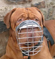 Best design Wire dog muzzle UK, perfect for Dogue De Bordeaux