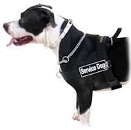 Amstaff Harness UK | Non-Pull Harness Staffordshire Bull Terrier