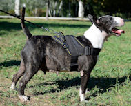 Dog Harness for English Bull Terrier | Nylon Dog Harness UK