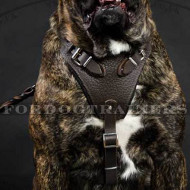 Leather Dog Harness for Cane Corso | Dog Harness with Handle UK